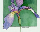 Purple Iris 2 print