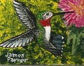 ACEO  Hummingbird ONE