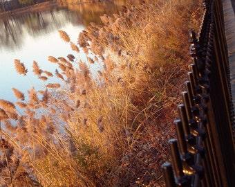 Autumn's Golden Glow  - 8x10 Fine Art Photograph