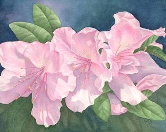Azaleas Original Watercolor Painting