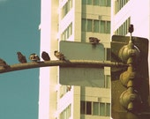 Pigeons Like To Party