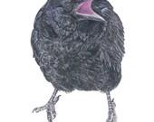 The Next Shaman Raven Drawing by Beth Surdut