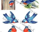 Blue Bird Collection - Digital Collage Sheet - Element of Collage - Printable PDF