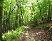 Nature photography-Forest road and green ferns