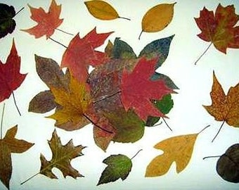 Real dried leaves 50-Dried assorted leaves-Woodland Wedding Extravaganza Bonanza - 50 Hand Picked and Pressed  Leaves