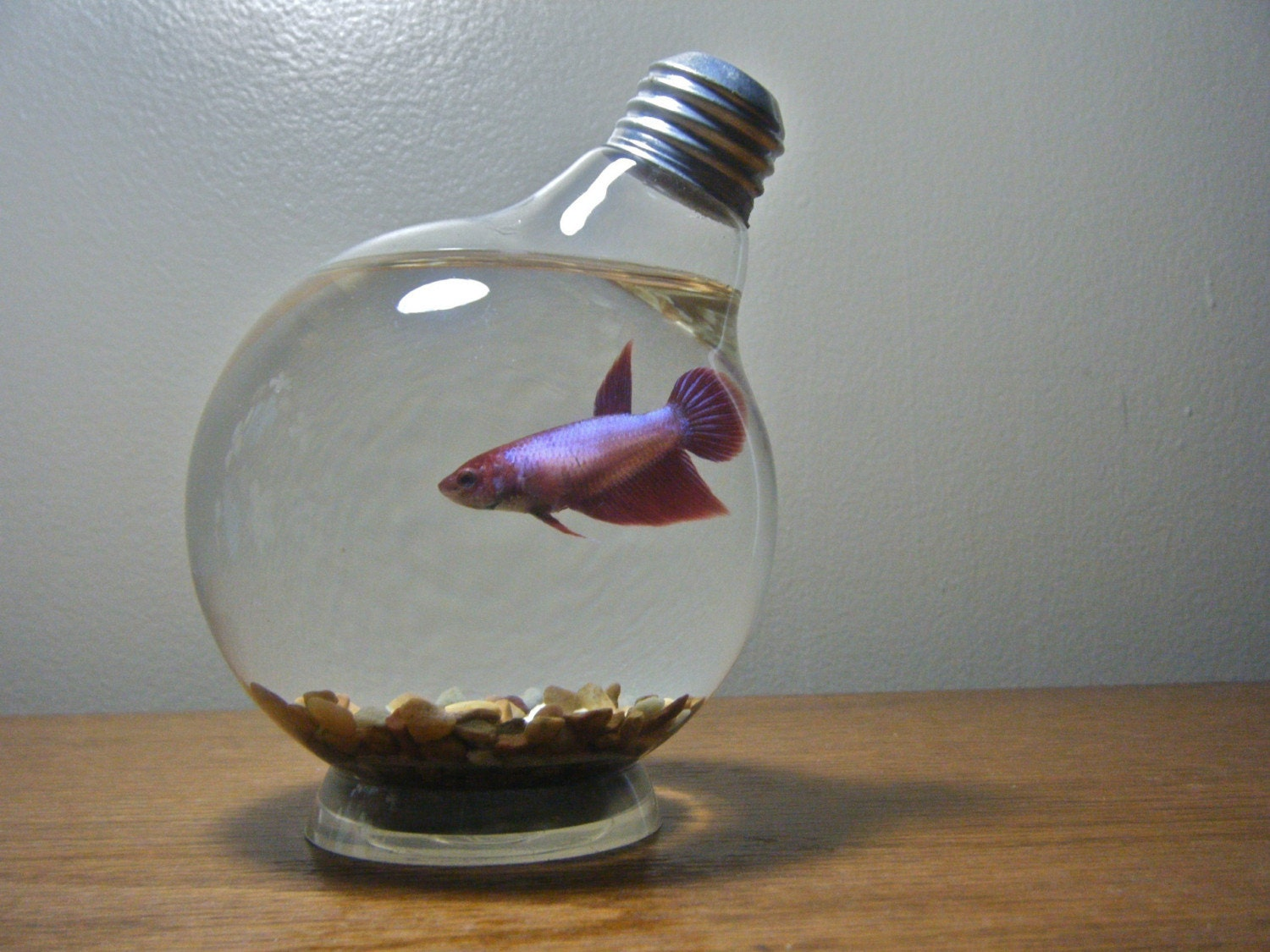 Medium lightbulb fishbowl for Betta fish tank light
