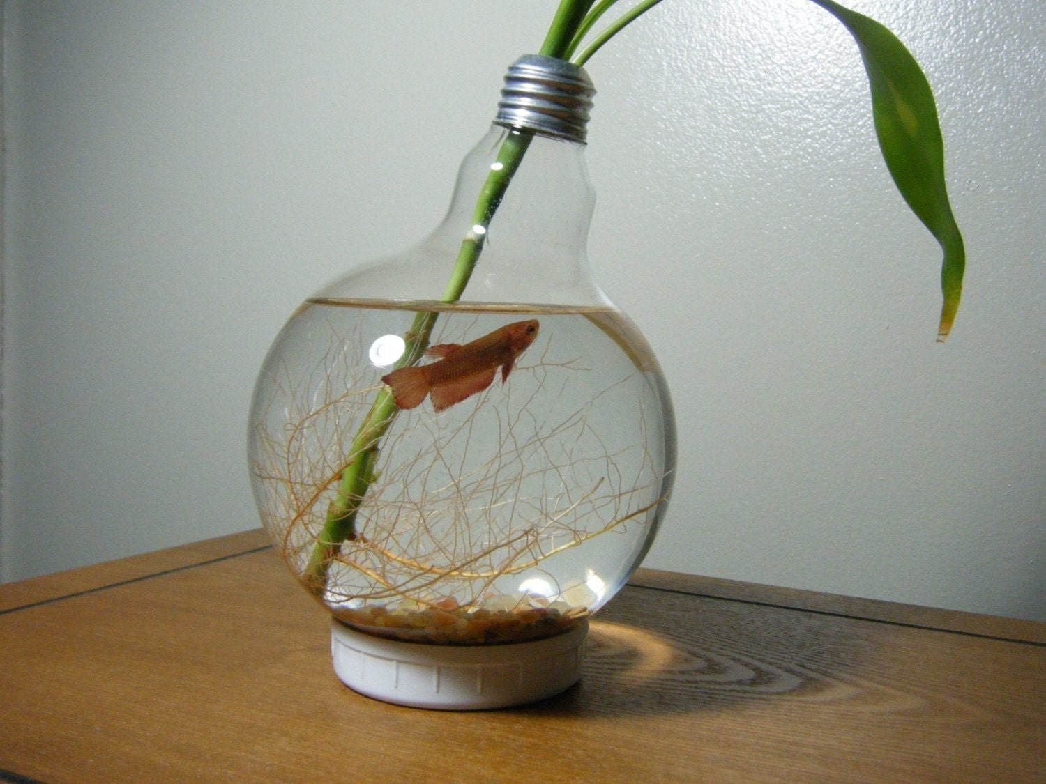 Large lightbulb fishbowl for Betta fish bowl ideas