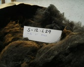 Border Leicester Romney Cross Raw Whole Fleece Sheep Fiber S 12 L29