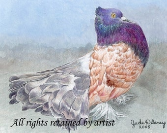 Indian Fantail Pigeon Matted Mini Print by Jude Delaney