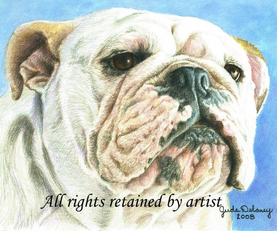 "English Bulldog Art Reproduction ""Spice"" by Jude Delaney"