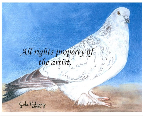 Ice Spangle Pigeon Art Print by Jude Delaney