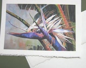 Bird of Paradise,  Note Card, Tropical Flower, Florida, Bird of Paradise art, tropical,  Exotic, Green, purple