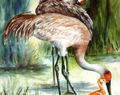 Sandhill Cranes watercolor print ACEO, A Family Affair, 768 Florida, Shorebird watercolorsNmore