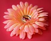 Flower Hair Clip, Peachy Pink Gerbera Daisy
