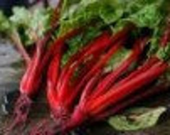 Organic Swiss Chard 'Ruby Red' 100 seeds