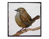 Winter Wren bird print of an original painting