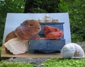 RESERVED Guinea Pig Fairytale Postcard Set - fine art guinea pig photography