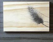 Indiana Grasses
