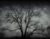 By the Guide of the Stars - 5x7 Fine Art Photography print - black night scene of lone tree with sparkling stars