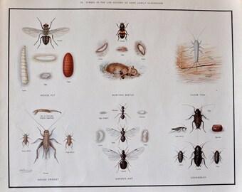 VINTAGE 1930's School Poster GARDEN INSECTS Beetles