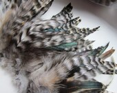 "2"" strip Strung Grey Chinchilla Rooster Schlappens Feathers - Natural grey color - individual feather up to 6.5"" long"