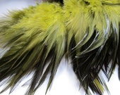 "Selling Out 3"" strip Olive Green Strung Rooster Saddles Feathers (individual feather around 2.5-3"")"