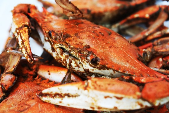 Maryland Crab Feast Photograph