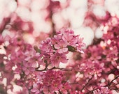cherry blossoms,pink flowers,blooming tree,soft and dreamy,floral art,nature photo,fine art photography,cottage chic decor,wall art