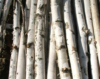 Chuppa /Birch Poles