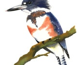 Limited Edition GICLEE PRINT / Watercolor Painting of Belted Kingfisher