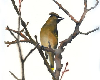 "Limited Edition GICLEE PRINT / ""Noble Street Waxwing"" / Watercolor Painting of a Cedar Waxwing"