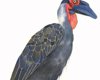 ORIGINAL Watercolor Bird Painting / Southern Ground Hornbill