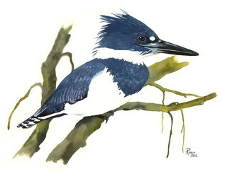 Limited Edition GICLEE MINI Print / Watercolor Painting of a Belted Kingfisher