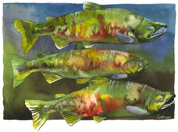 "ORIGINAL Watercolor Fish Painting / ""The Dog Pound"" / Chum Salmon"