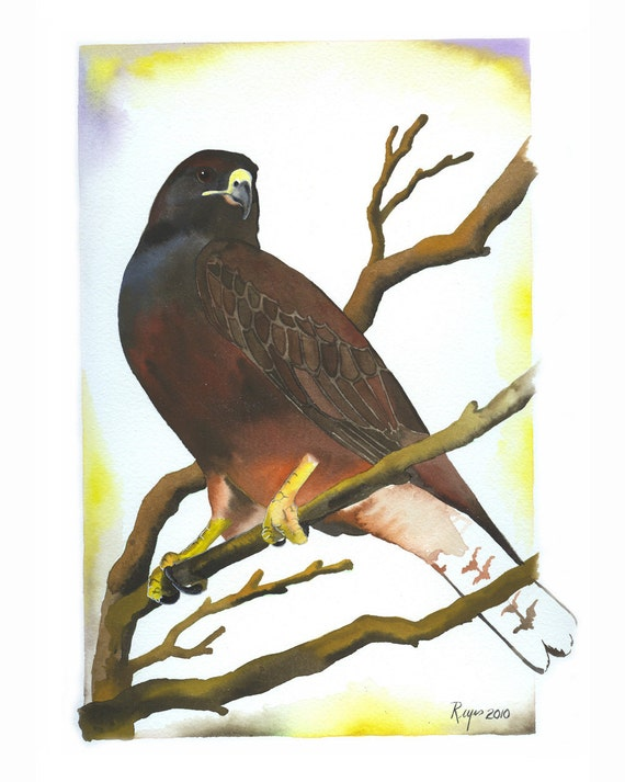 """Limited Edition GICLEE PRINT / """"Dark Morph"""" / Watercolor Painting of Swainson's Hawk"""