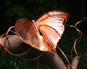Butterfly Swallow Tail Wrap Around Brindled Copper