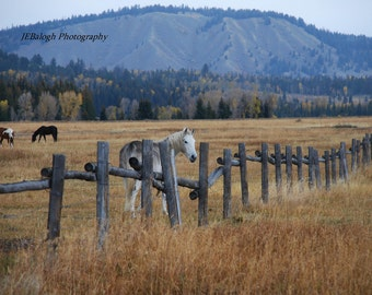 "Landscape Photography,Horse Photography,Equestrian, blue gold green,White horse fence horses field, ""Hey Old Friend"", Fine Art Print"