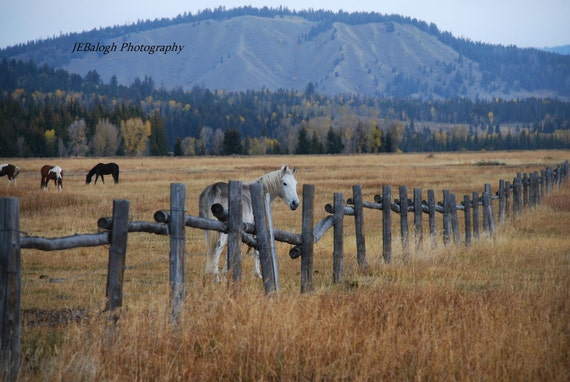 """Landscape Photography,Horse Photography,Equestrian, blue gold green,White horse fence horses field, """"Hey Old Friend"""", Fine Art Print"""