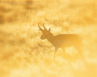 Yellow, Antelope Sunrise, Woodland, Desert Fine Art Photo