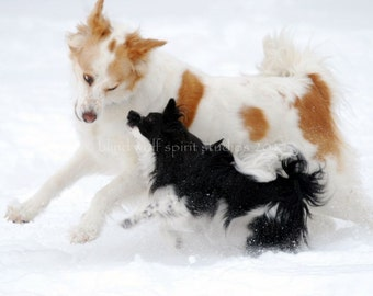 Snow Dogs Husky Papillon Dog Pet Photography Fine Art