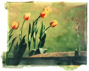 Tulips to the Water--hand touched print of original negative image transfer, signed and matted
