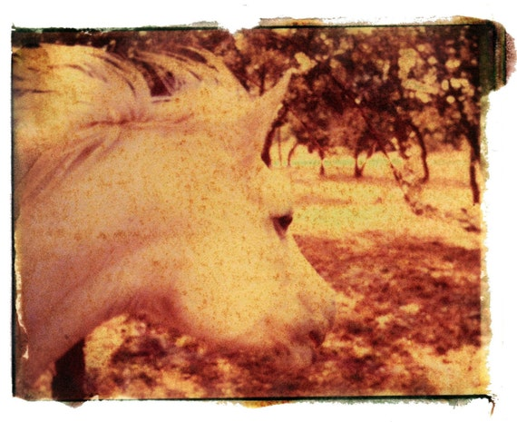Wind Horse--hand touched print of original negative image transfer, signed and matted