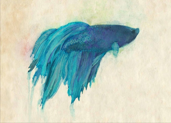 "Modern Betta Art Print - Siamese Fighting Fish Print - Archival Print 5"" x 7""  or 8""10"""