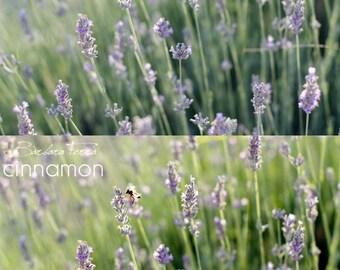 1 Photoshop Action - Cinnamon Processing