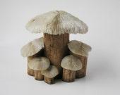 Coral Mushrooms