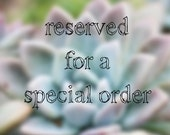 reserved for Kindra