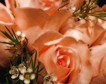 Roses Aglow