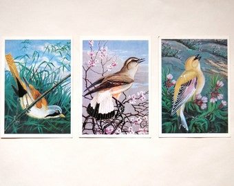 Set of Three Vintage Soviet Bird Postcards - Great Tit - Wheater - Brambling - 1980s - from Russia / Soviet Union / USSR