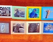 New Zoo Review - Lunch Notes / Gift Tags / Shop Thank-yous with photos of animals - set of 8