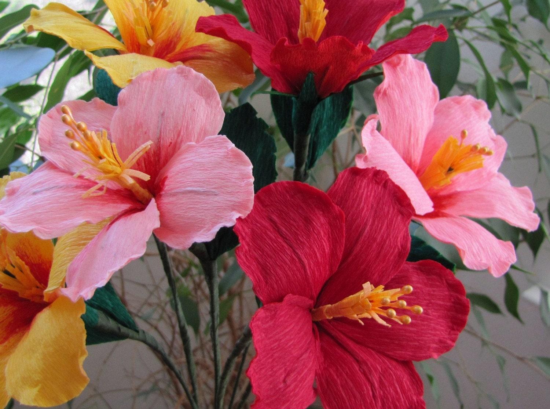 Hibiscus Flower Essay  Djaybigbrothacom Hibiscus Flower Essay
